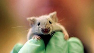 فأر يقتحم جلسة برلمان ويثير فوضى بين النواب في إسبانيا (فيديو)
