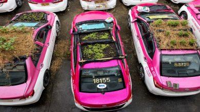 """""""كورونا"""" يحول سيارات تاكسي بانكوك إلى بساتين خضراء"""